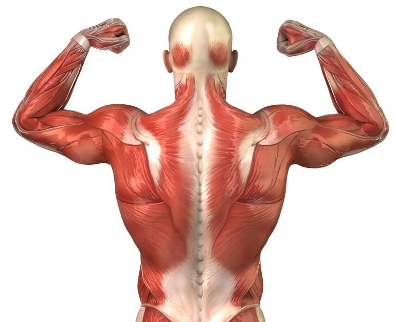 Pérdida de la función muscular